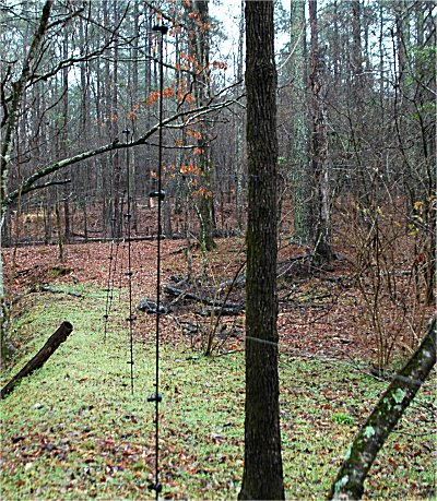 TYPES OF DEER FENCING - WHAT THE BEGINNER NEEDS TO KNOW