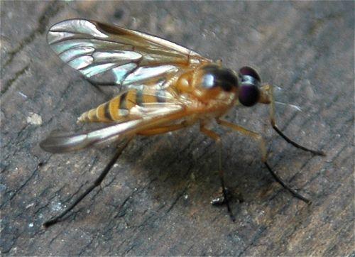 драйвер fly ds500