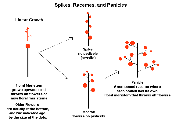 pikes, racemes and panicles